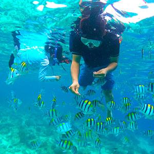 フィリピンセブ島スタディツアー自然体験シュノーケリング