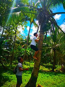 フィリピンセブ島スタディツアーココナッツツリー体験